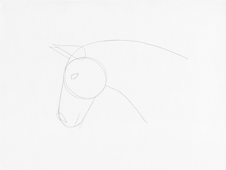How to Draw a Horse Head