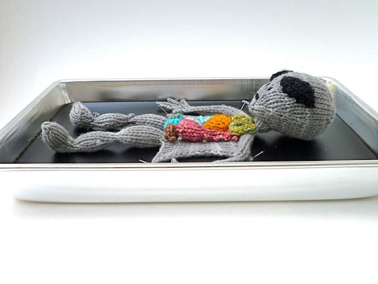 Knitted Animal Anatomy Kits by Emily Stoneking