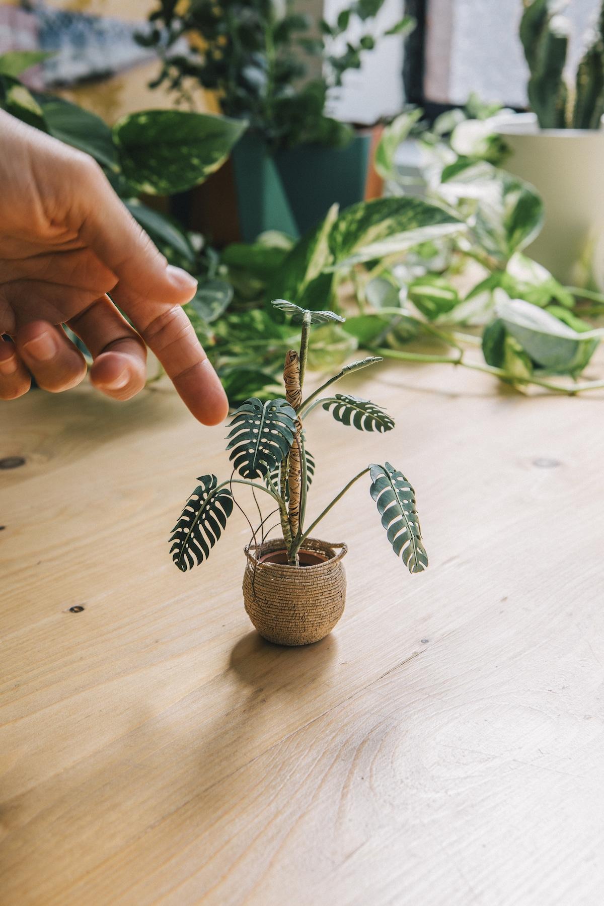 Plantas de papel