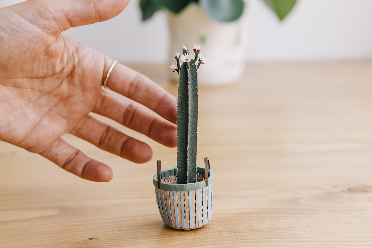 Cactus Paper Plant