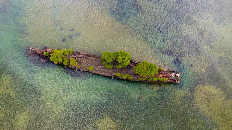 Mangroves Growing in Ship Wreckage