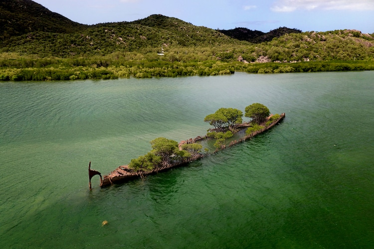 Shipwreck Overrun by Mangroves