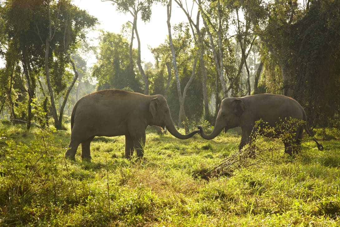 Elephant Camp in North Thailand