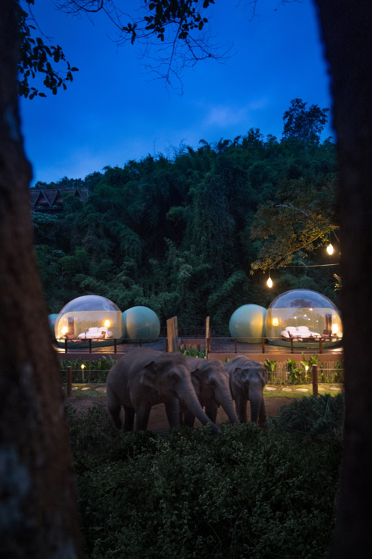 Sleeping with Elephants in Thailand