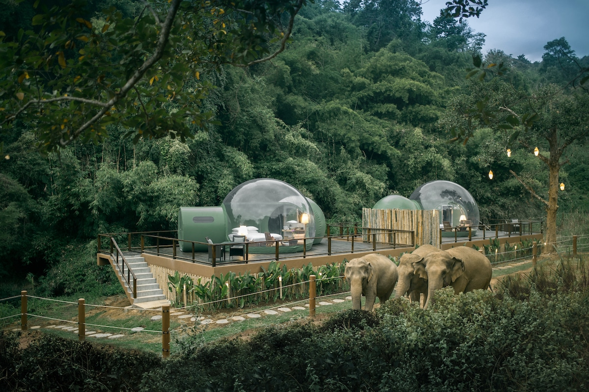 Jungle Bubble at the Anantara Golden Triangle Elephant Camp & Resort