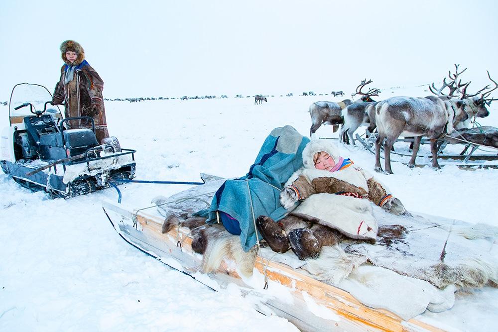 Sleds for Nomadic Reindeer Herders