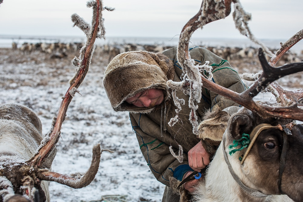 Nomadic Reindeer Herders
