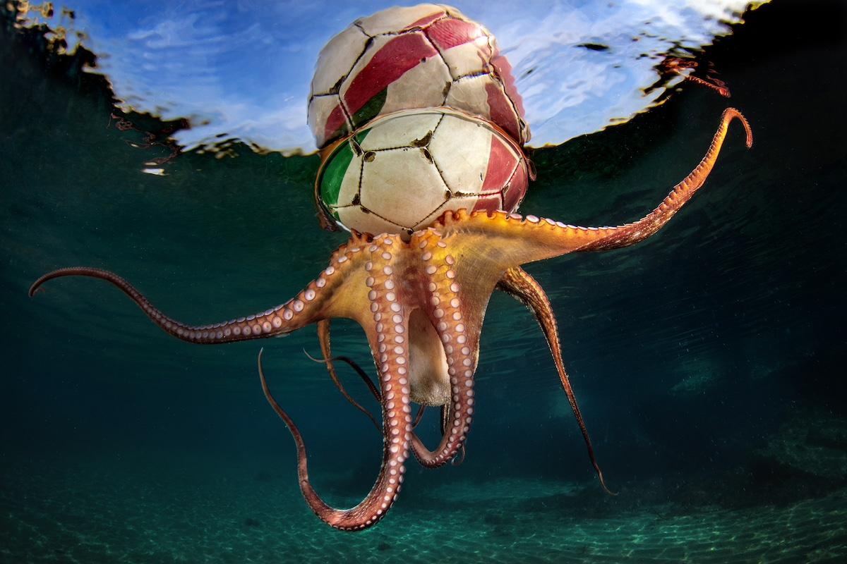 Octopus with Soccer Ball on Its Head