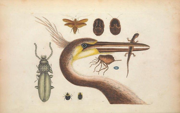 Ilustraciones científicas de la Biodiversity Heritage Library