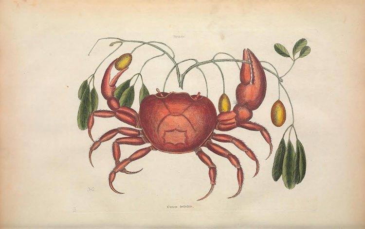 Archivo de ilustraciones de la Biodiversity Heritage Library