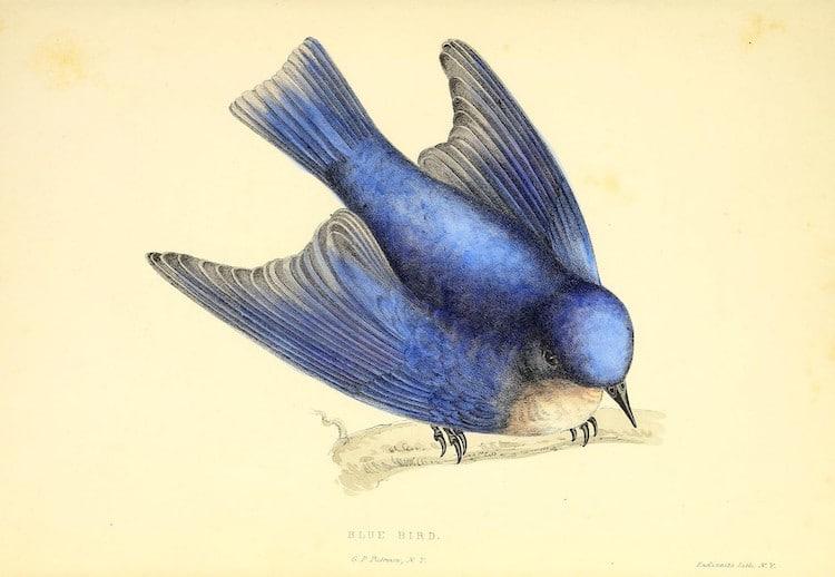 Ilustración de ave en línea