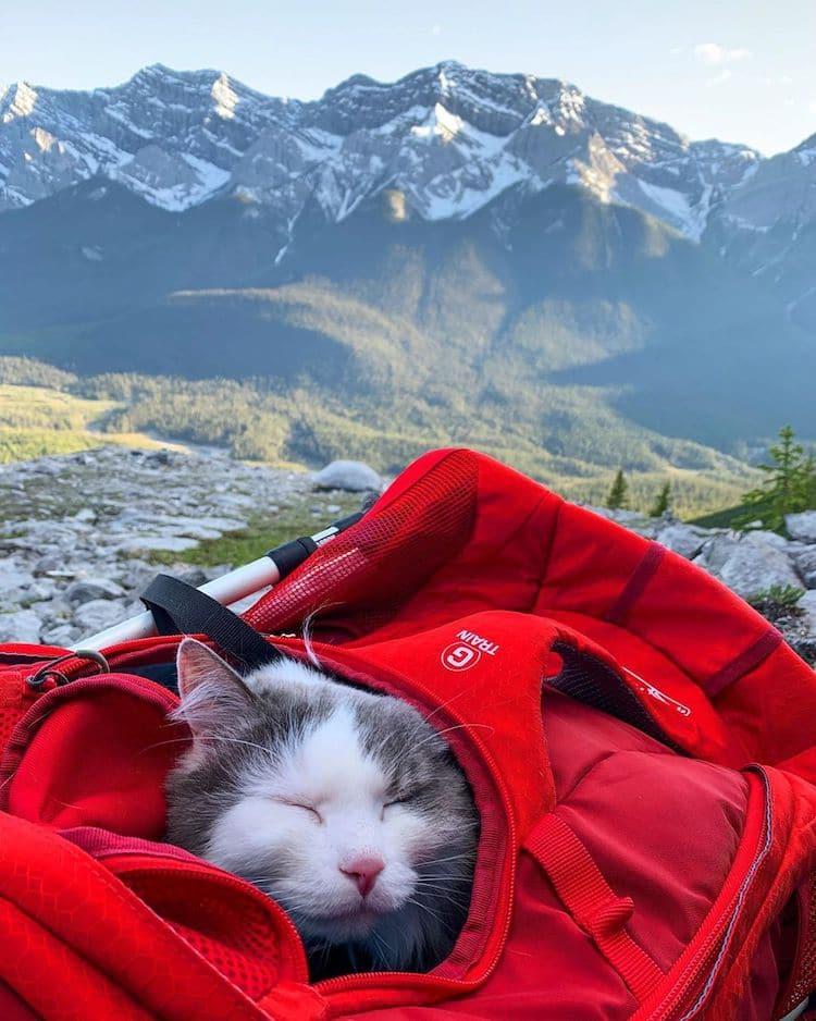 Gary el gato explorador