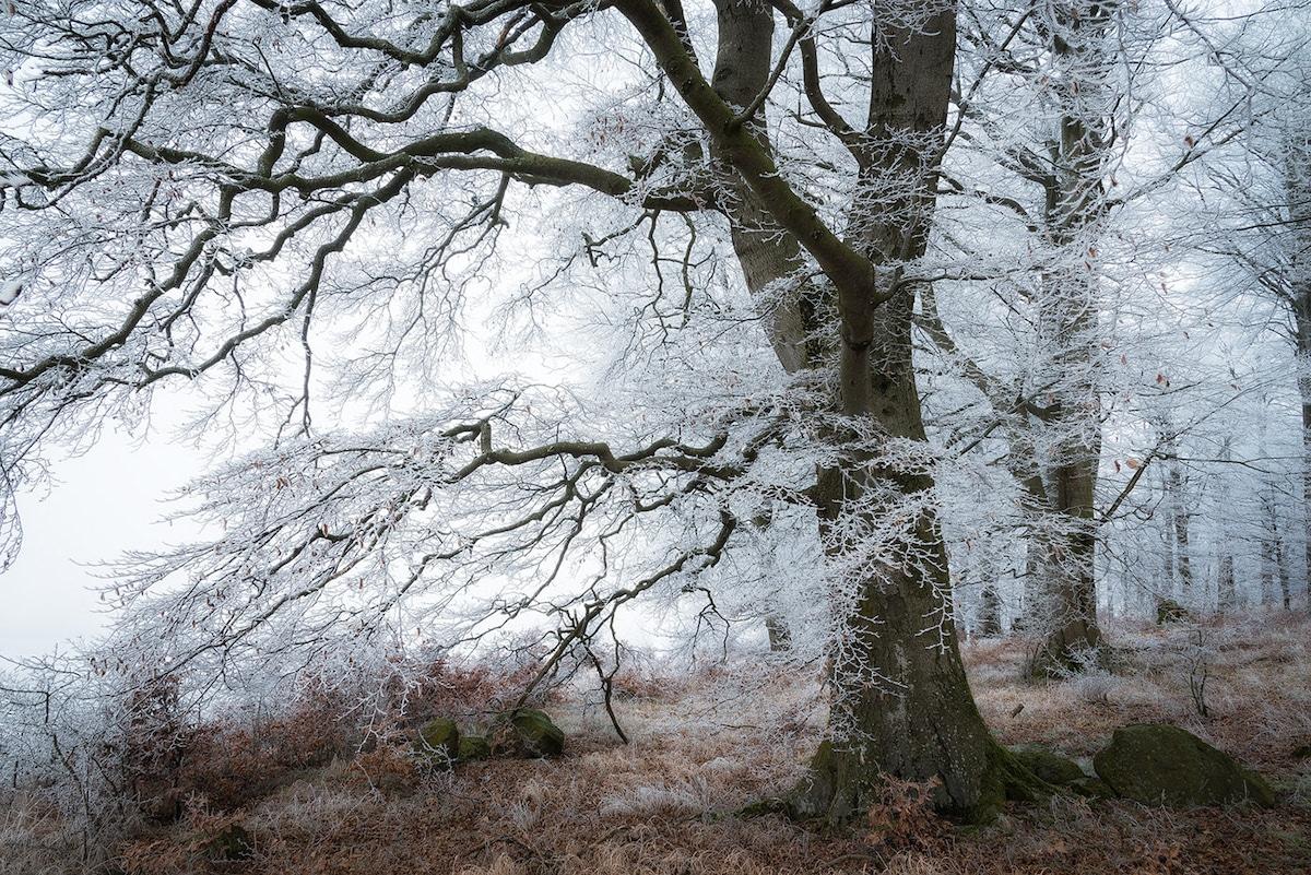 bosque con nieve