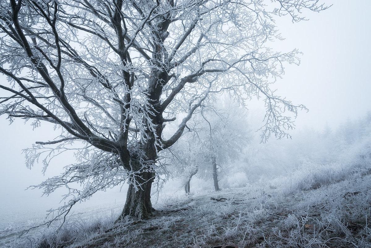 Hoar Frost by Heiko Gerlicher