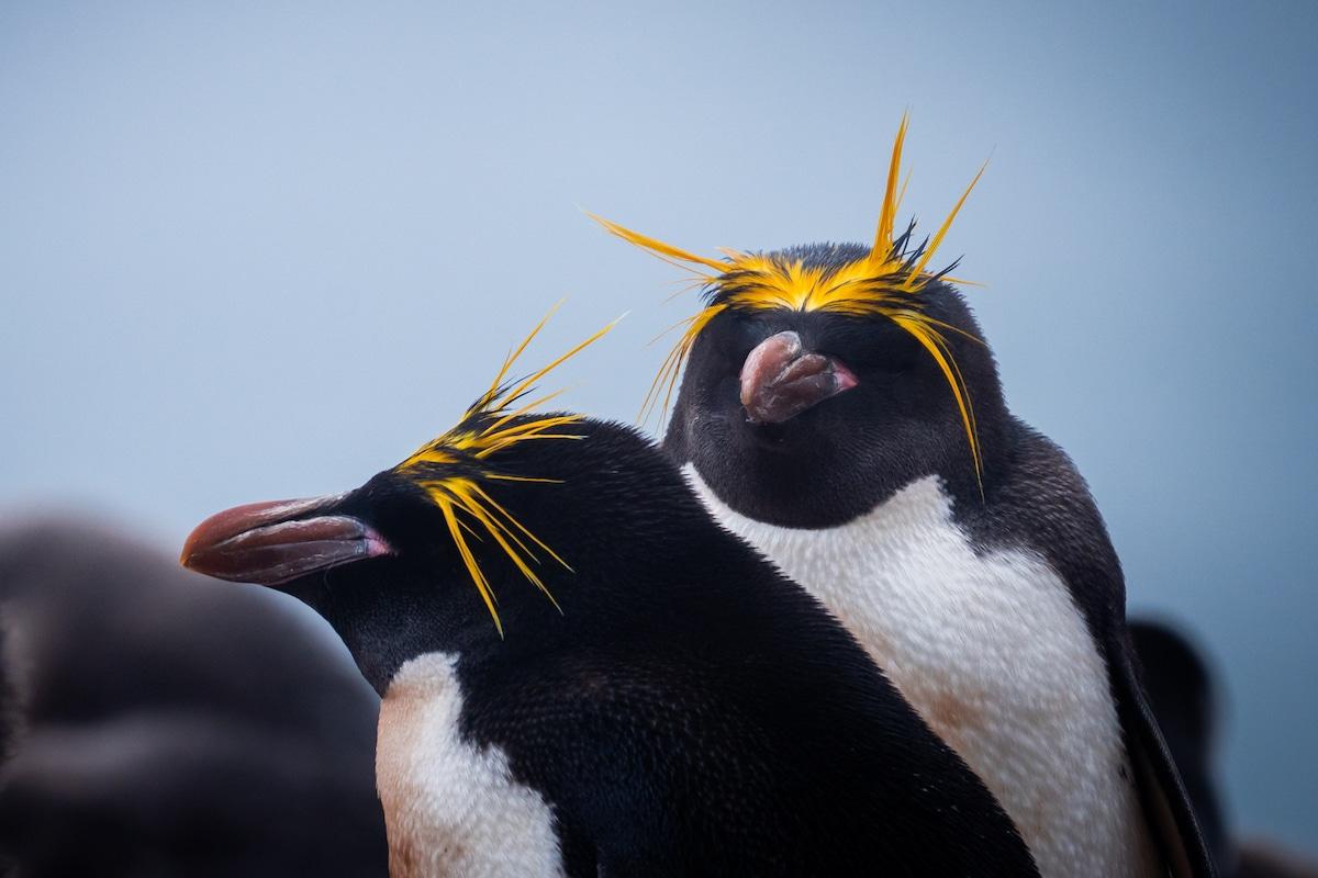 Deux pingouins en Antarctique