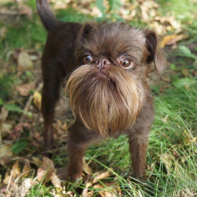 Perro hipster con barba