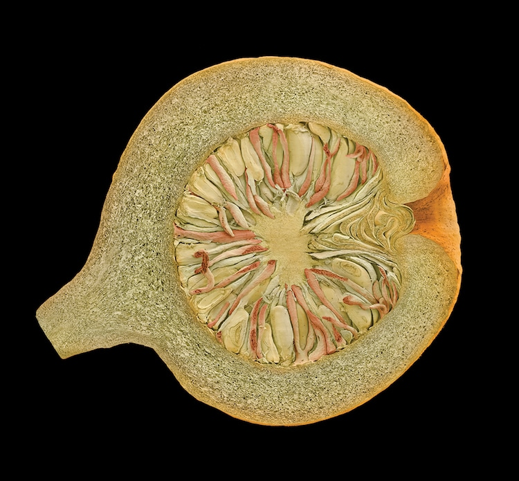 Rob Kessler fotografia microscopica