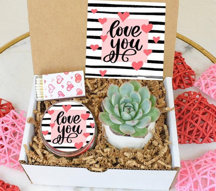 Succulent Gift Set