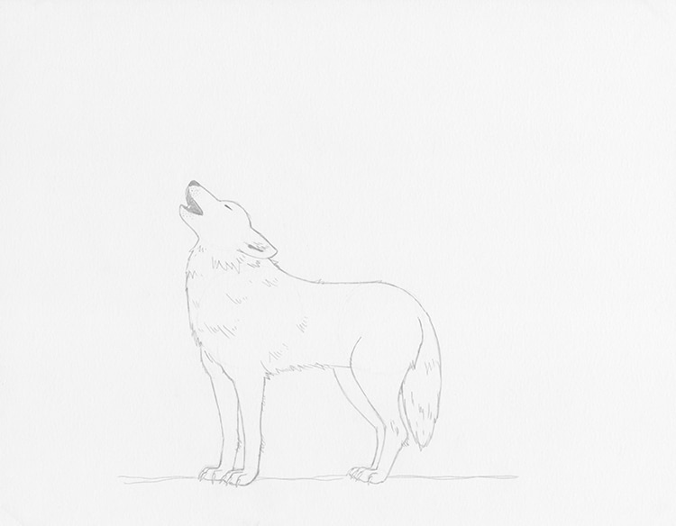 How to Draw a Wolf Howling at the Moon