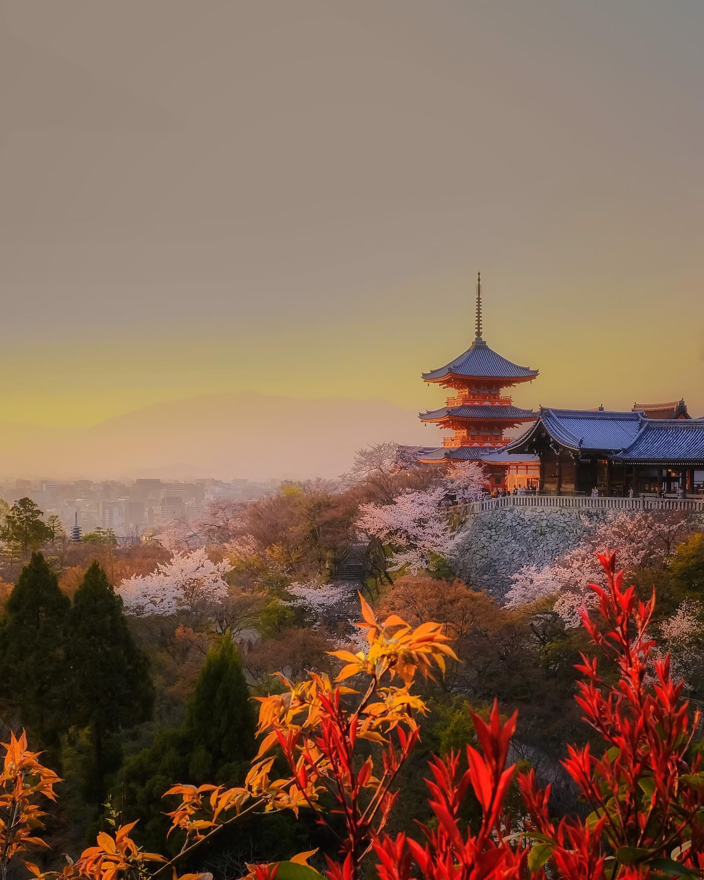Japanese Temple with Colorful Fall Leaves
