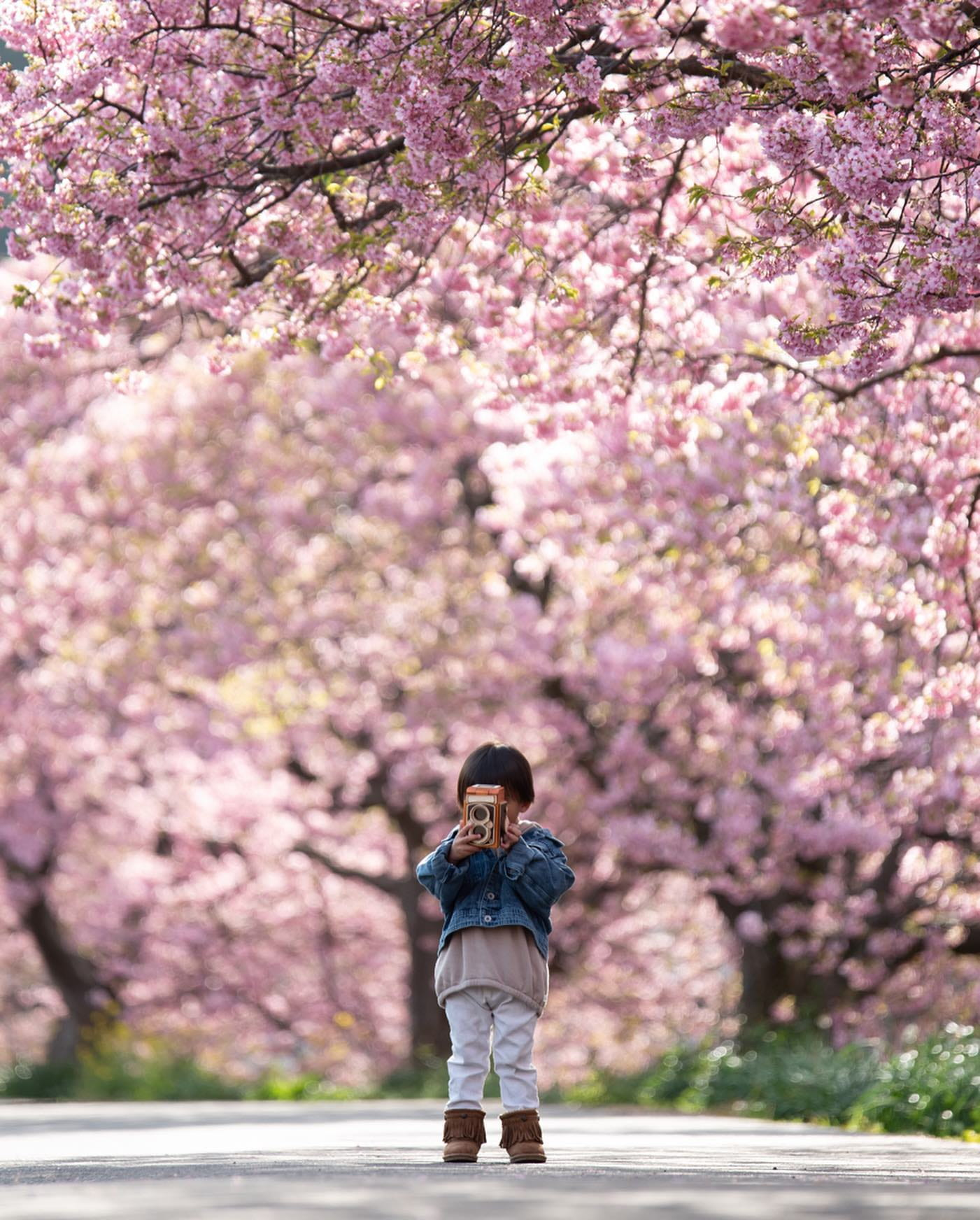Child with Camera in Front of Cherry Blossoms