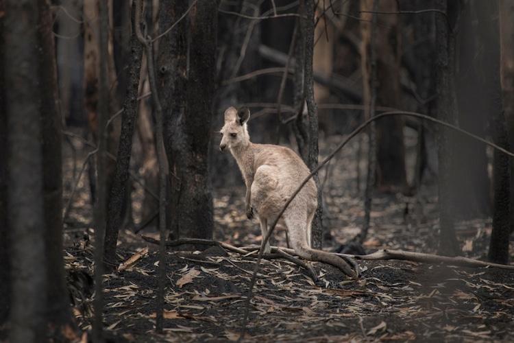Australian Bushfires Extinguished