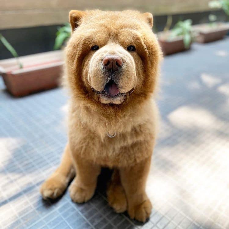 Cute Dog Picture