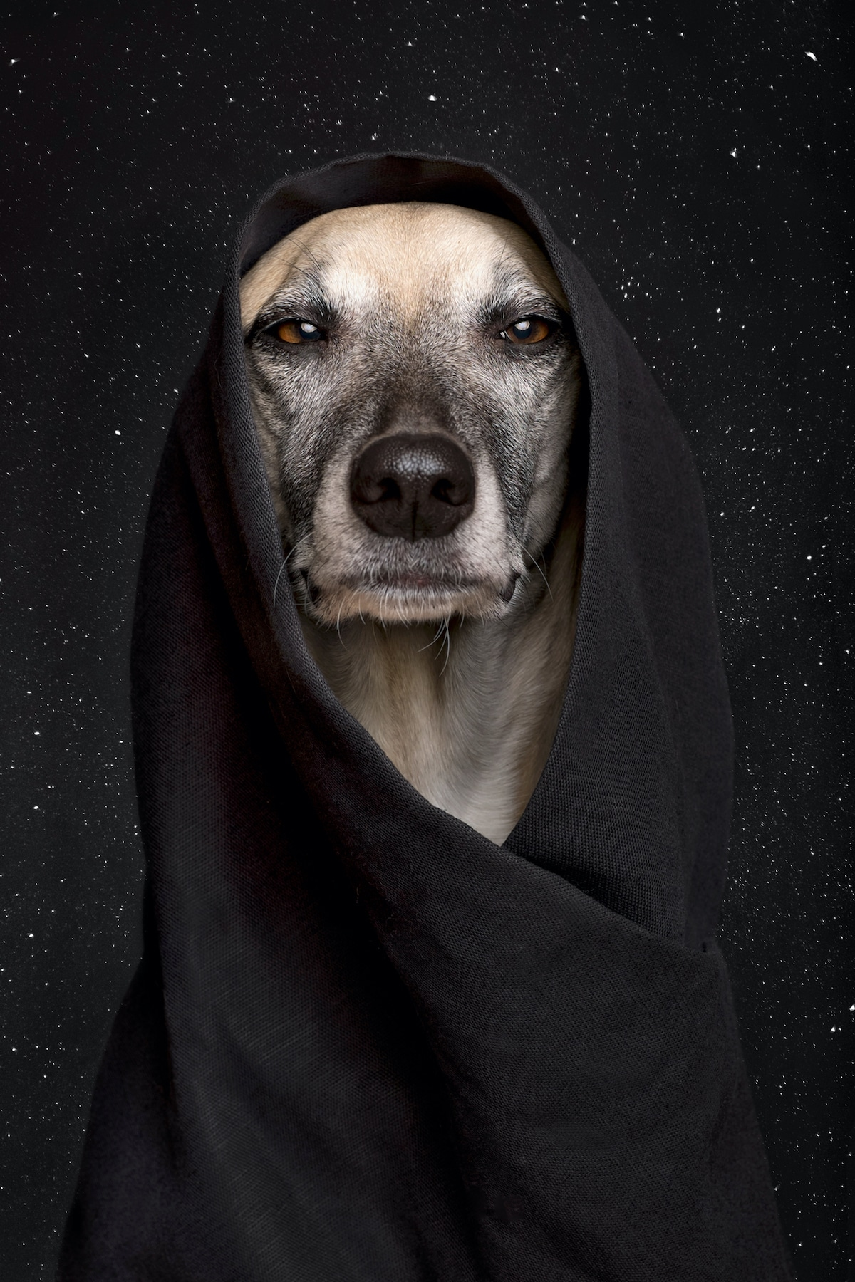 Animal Photography by Elke Vogelsang