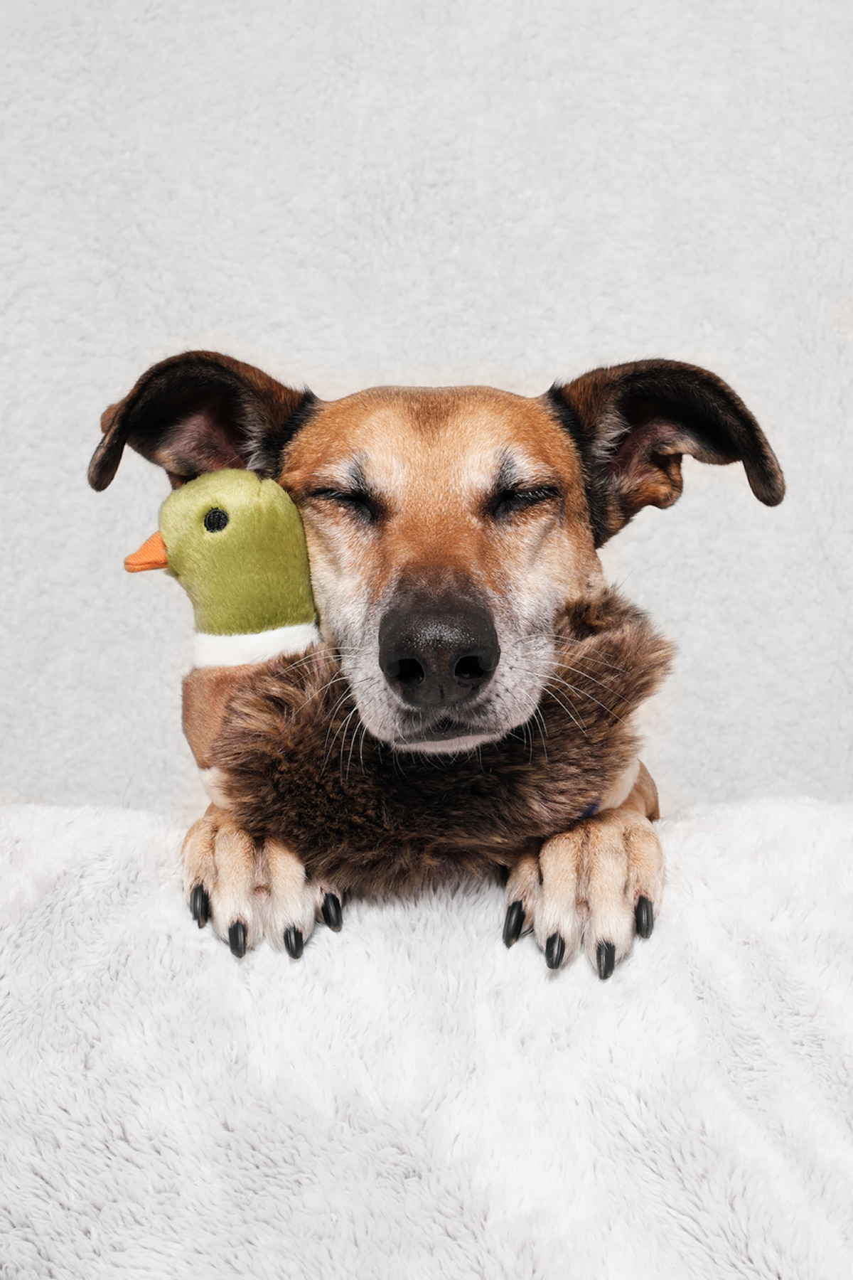 Cute Dog Photography by Elke Vogelsang