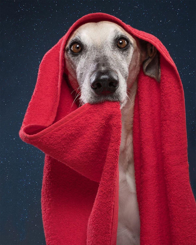 perro con manta por Elke Vogelsang