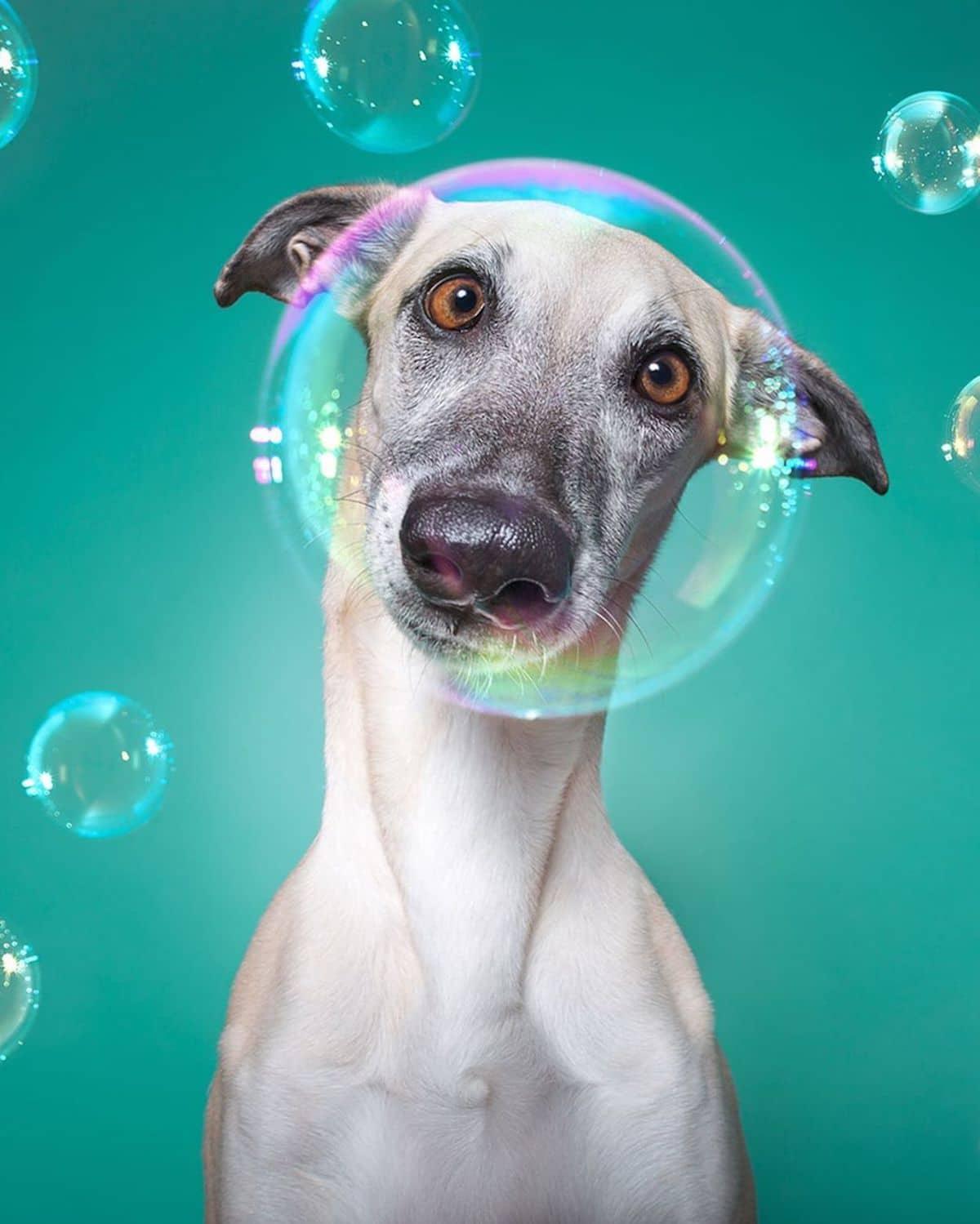 retratos de perros por Elke Vogelsang