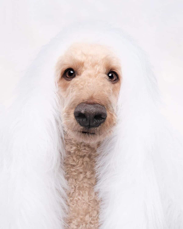 fotografias de perros por Elke Vogelsang