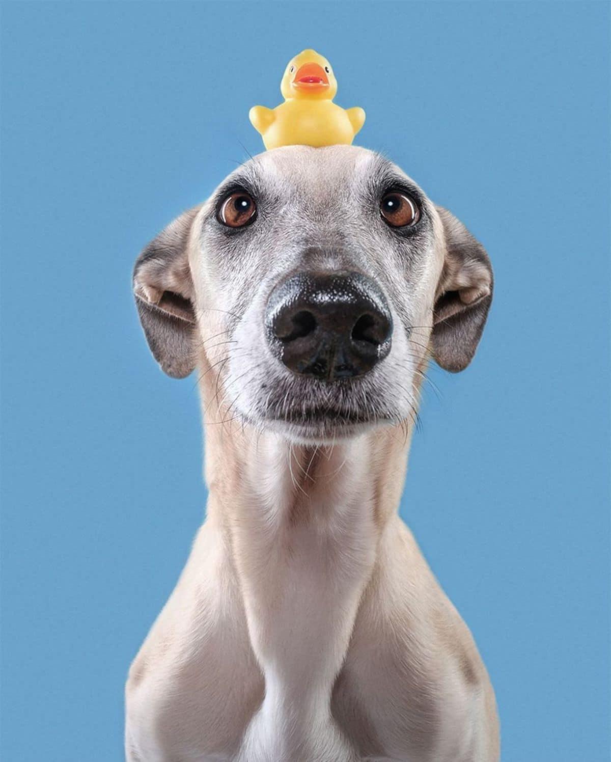 perro chistoso por Elke Vogelsang