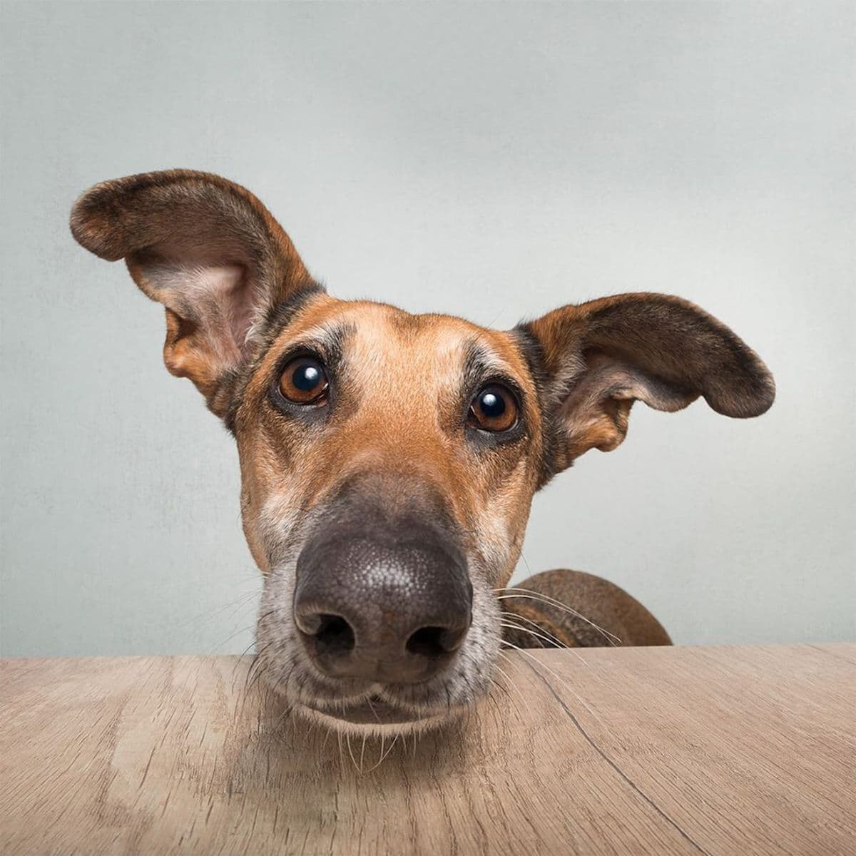 Dog Portrait Photography by Elke Vogelsang