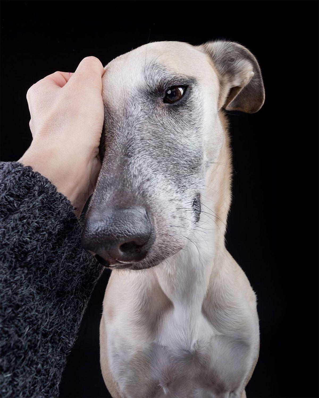 Dog Portrait Photography by Elke Vogelsang