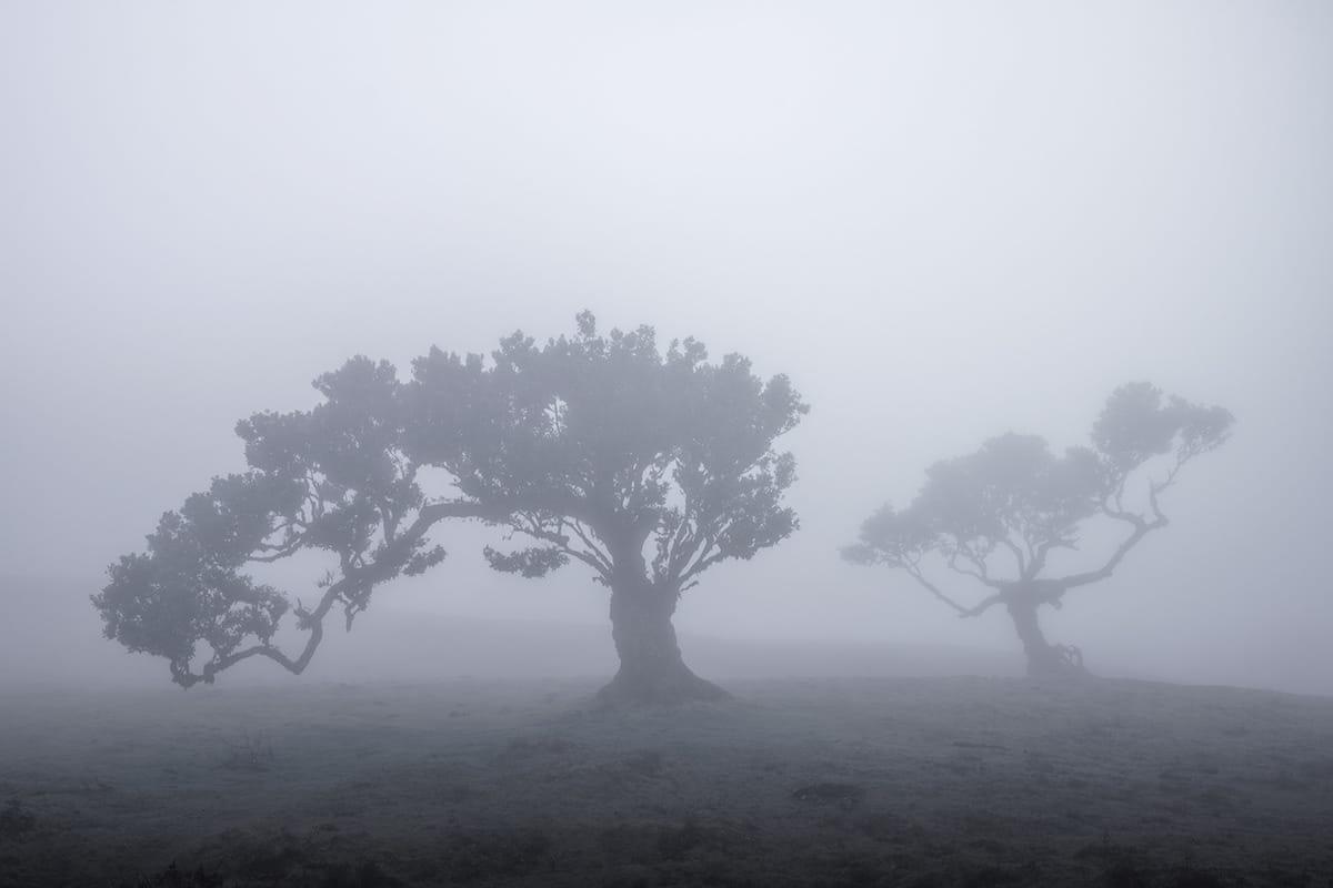 Fanal Forest in Fog
