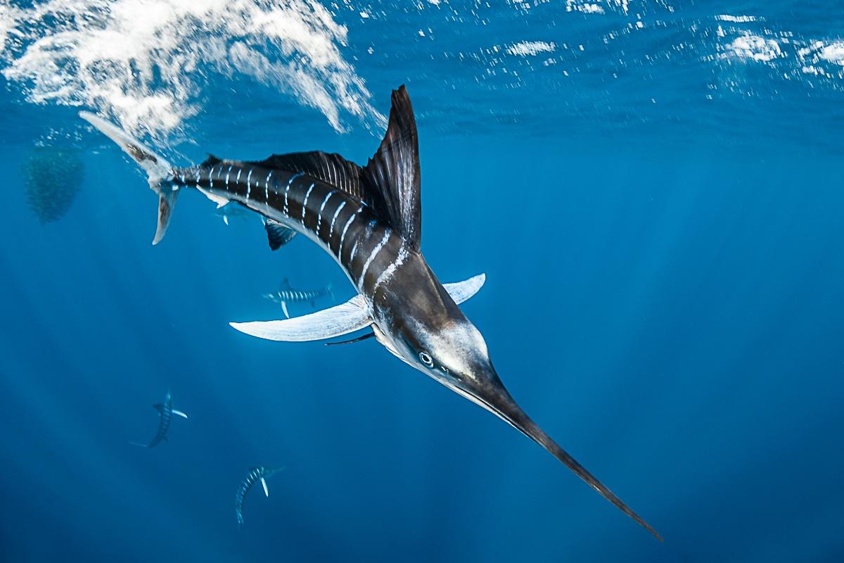 Fish Underwater by Greg Lecoeur