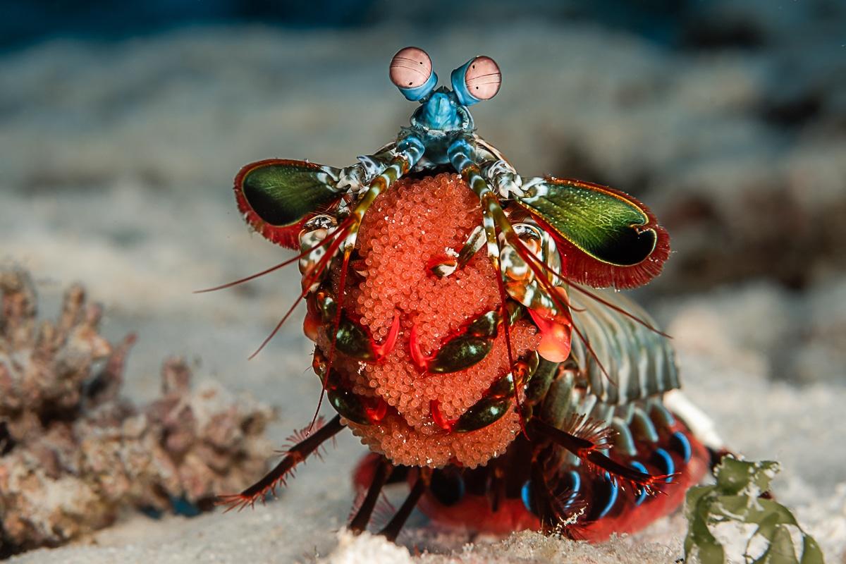 Marine Life Underwater