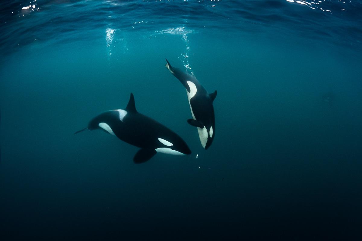 Animals Underwater by Greg Lecoeur