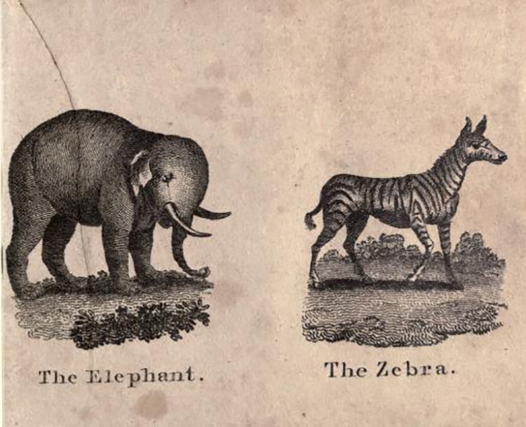 a black and white illustration of an elephant and a zebra stand side by side with the name elephant and zebra imprinted beneath each animal