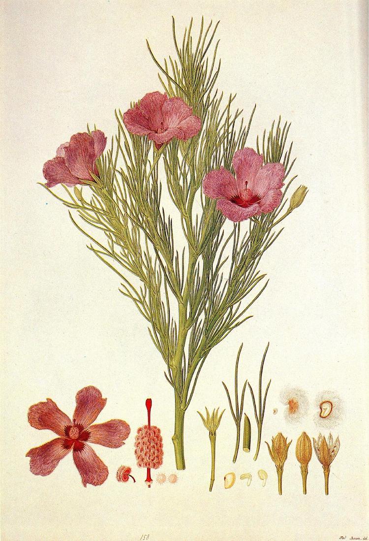 exposiciones virtuales ilustracion botanica