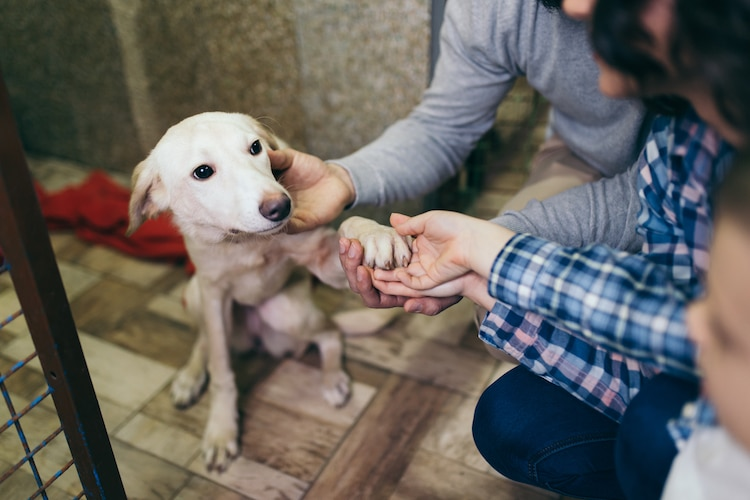 Adopt a Dog from Shelter