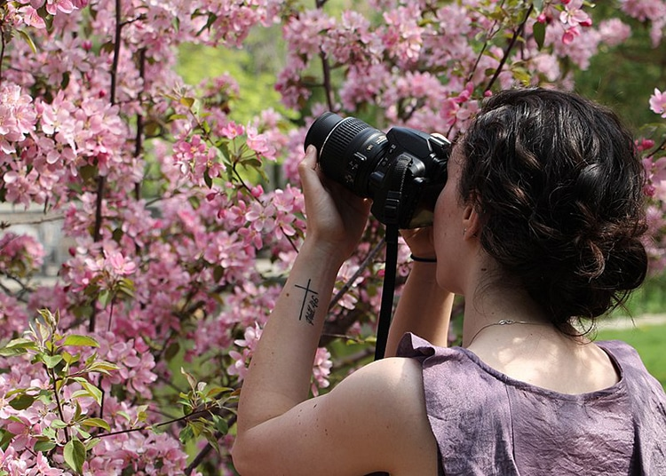 woman taking a picture of a cherry blossom tree in full bloom