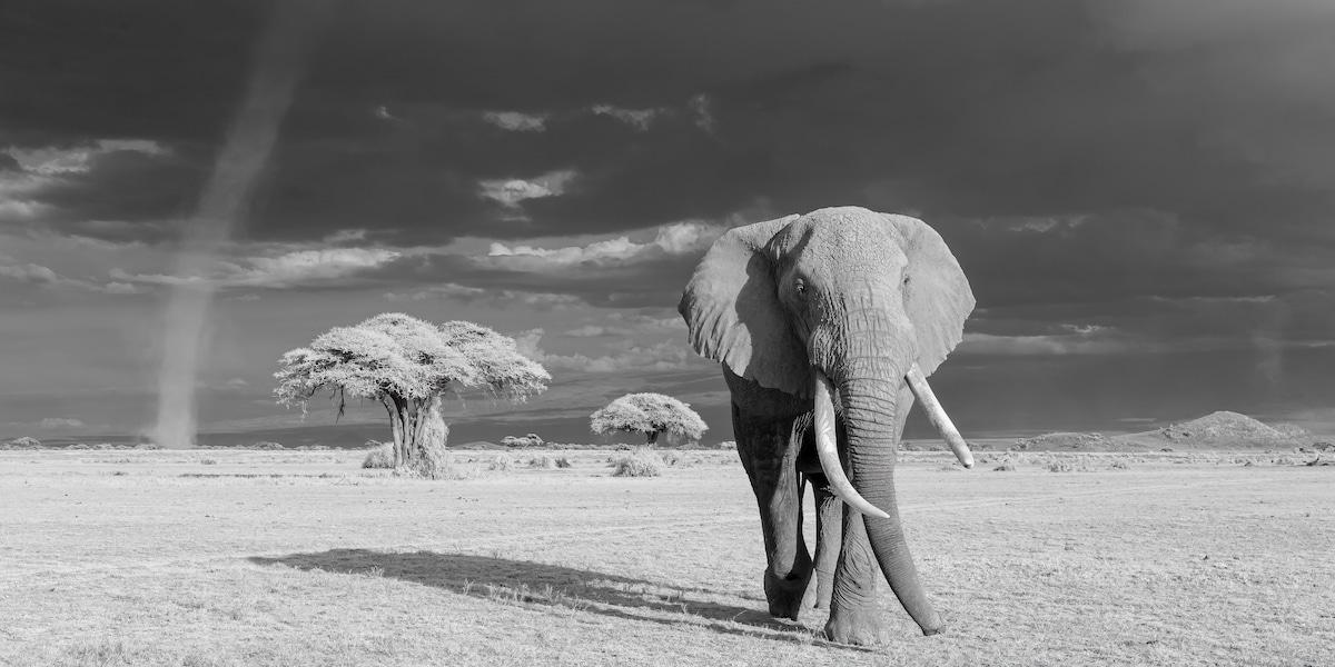 Elefante en el Parque Nacional Amboseli, Kenya