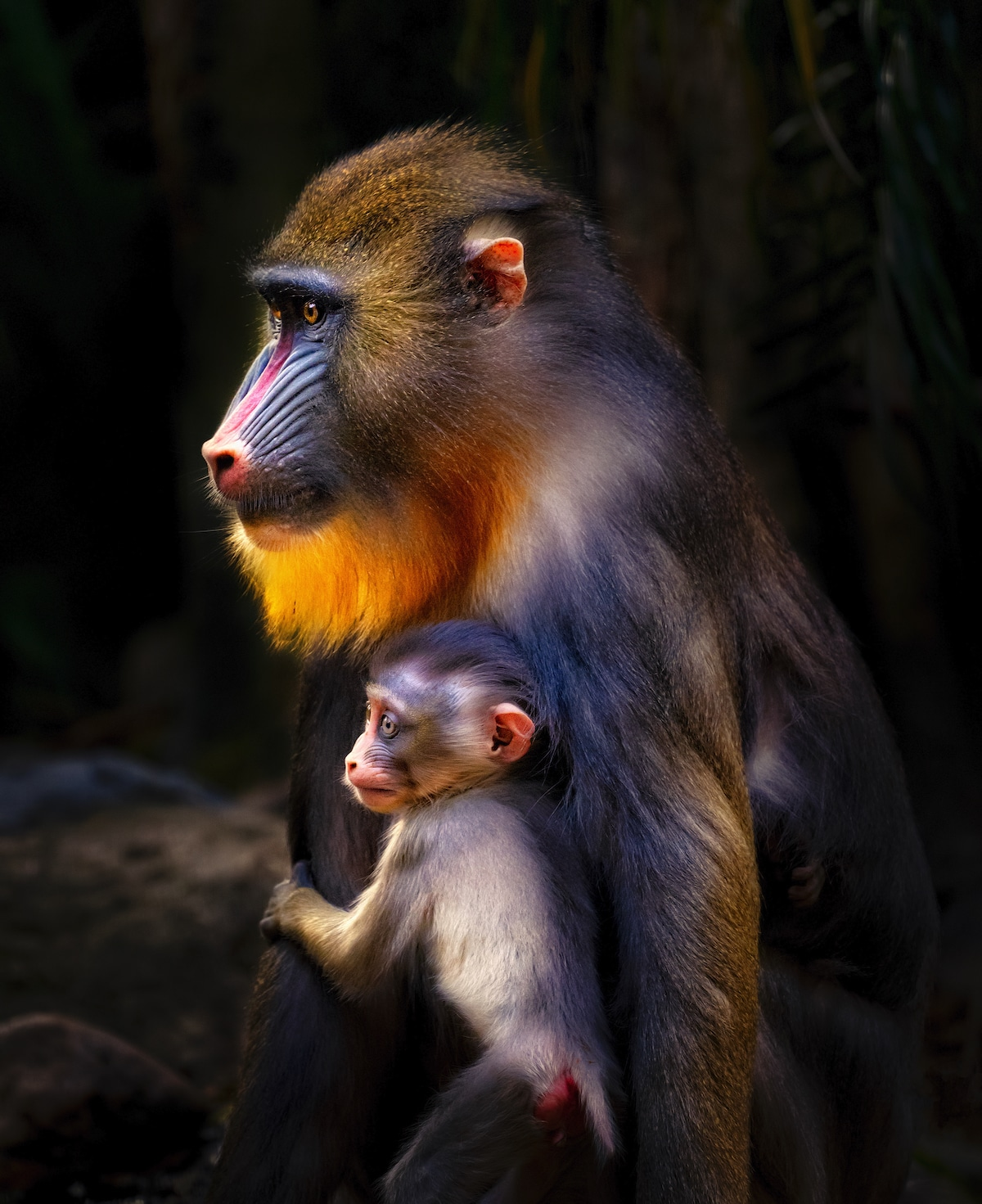 Baboon Holding a Baby
