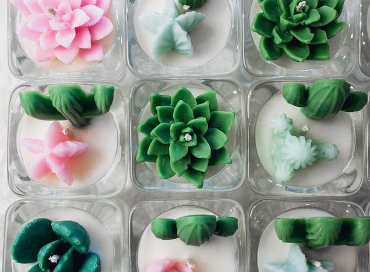 Succulent Soy Candles by Zoet Studio