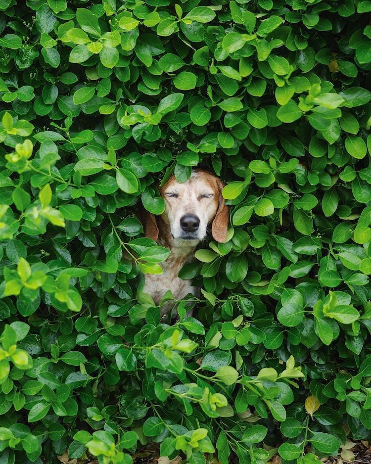 fotos de viajes con mascotas