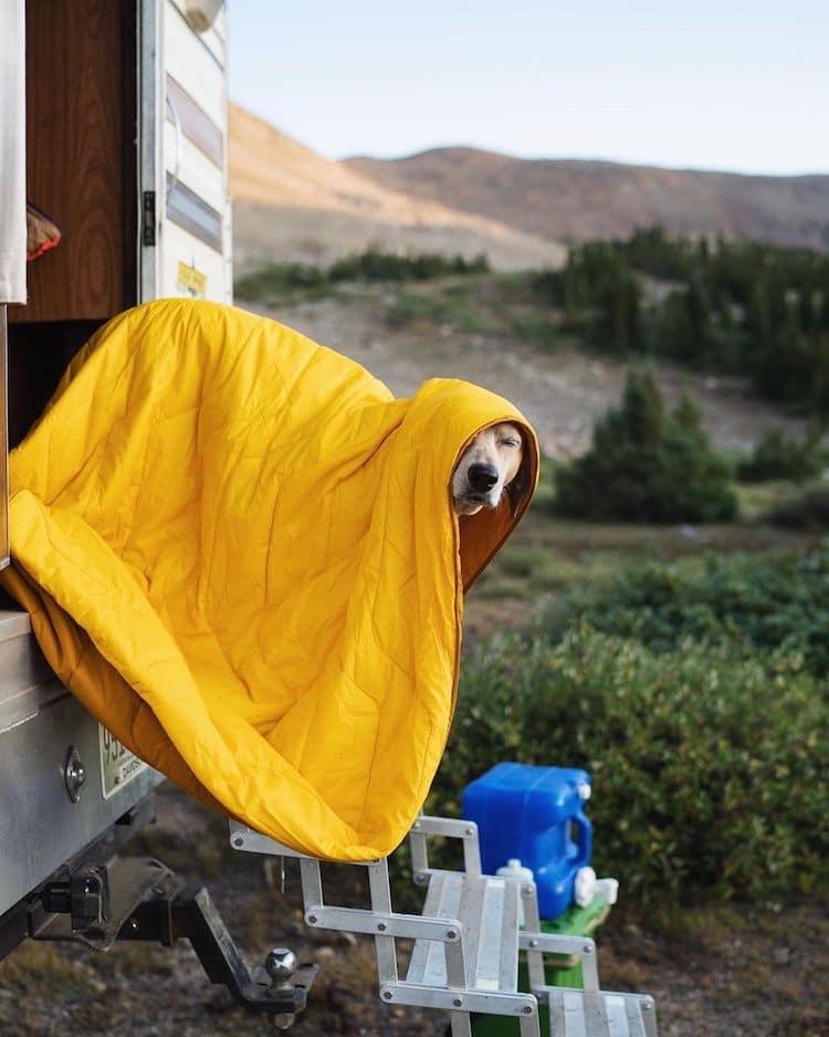 fotografias de perros de viaje