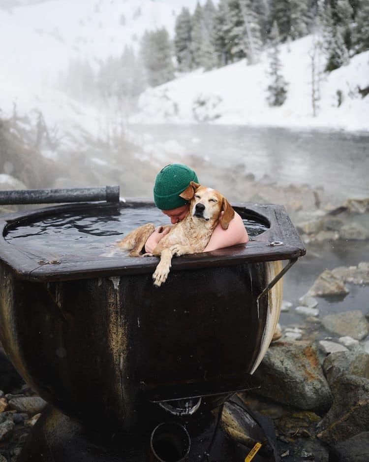 Maddie the Coonhound perro de viaje