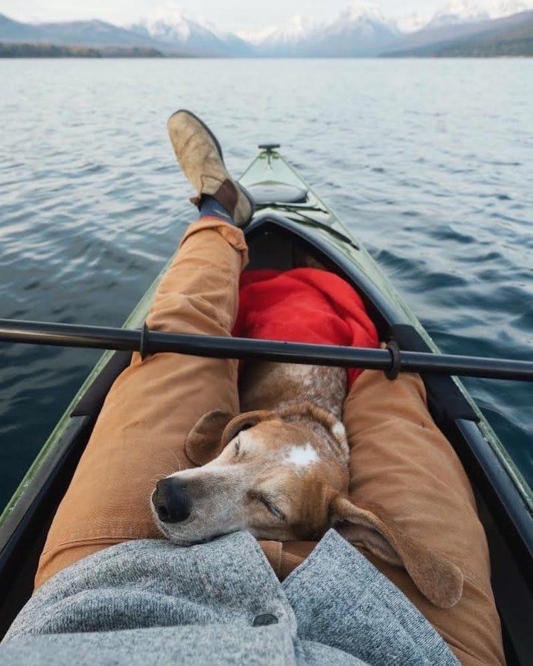 Maddie the Coonhound perros de viaje
